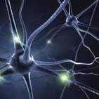 Células y Neuronas