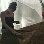 Avanzan los preparativos para la campaña de tabaco en Matanzas
