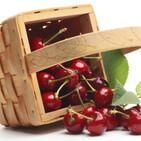 Alianza Agroalimentaria Aragonesa: la cereza