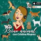 Recomendaciones Coronavirus, animales de compañía, Paloma Martín, Consejera Medio Ambiente, Comunidad de Madrid