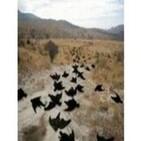 098 - ¿Por qué mueren de golpe animales en diferentes partes del mundo?